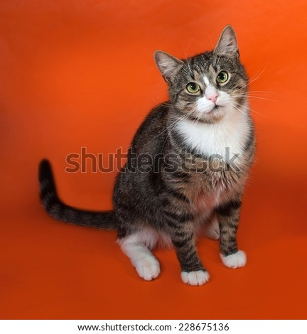 White and striped spotted cat sitting on orange background - stock photo