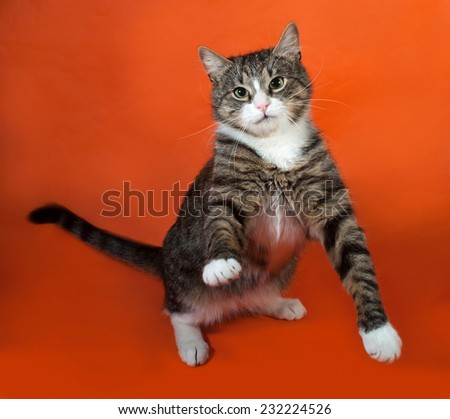 White and striped spotted cat standing on orange background