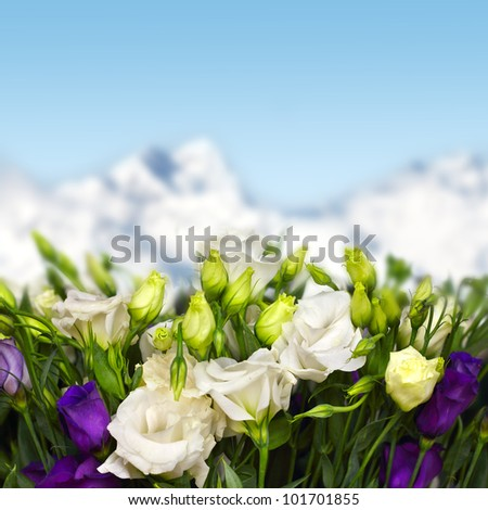 white and violet lisianthus flowers in mountains