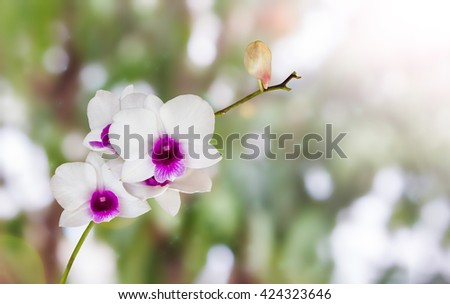 White and violet orchid flowers bunch on nature green bokeh and sunlight background