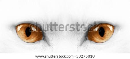 White angora cat with yellow eyes - stock photo