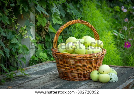 White apple variety Papirovka in a wicker basket on an old wooden table top - stock photo
