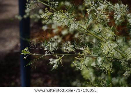 White australian flowers green leaves stock photo royalty free white australian flowers with green leaves mightylinksfo