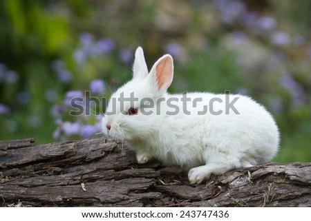 White baby rabbit on trunk - stock photo