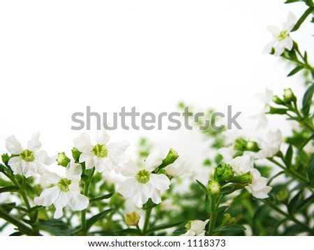White background with white flowers for border/frame