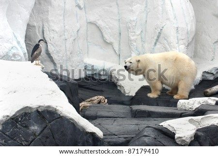 White bear and bird looking at each other - stock photo