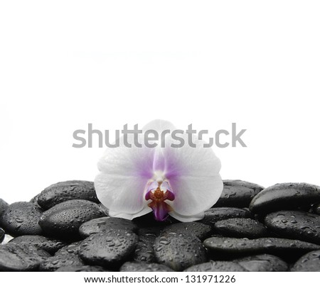 White beautiful orchid on wet stones