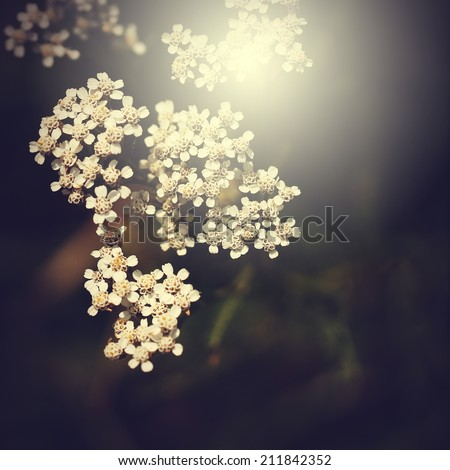 White beautiful vintage flowers background - stock photo