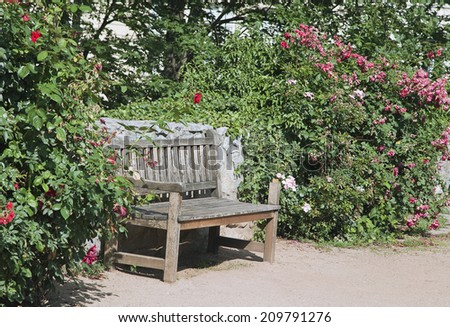 White bench among green plants on a sunny day - stock photo