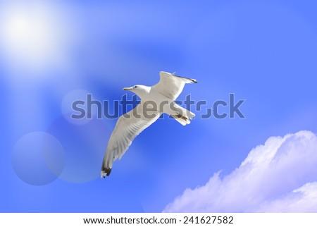 white bird of paradise on blue sky  - stock photo