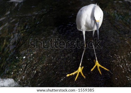 White bird on rock. - stock photo