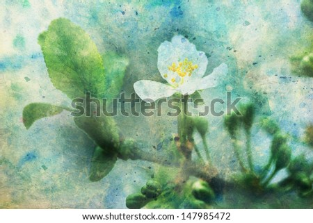 white blooming apricot tree flower and watercolor splatter - stock photo