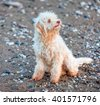 White boomer dog on the beach - stock photo