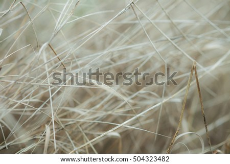 White, bright, dry autumn branches, grass background