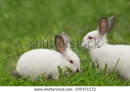 White bunny eating green grass