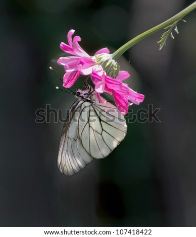 White butterfly hanging on the beautiful red flower - stock photo