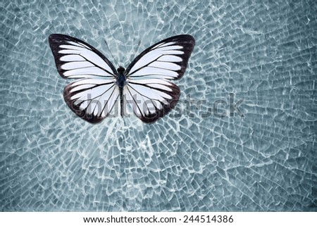 White butterfly on a broken glass of the car. - stock photo