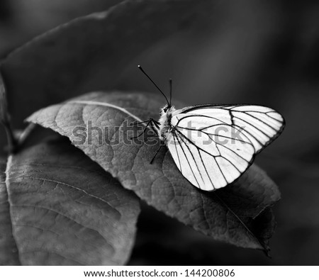 White butterfly on a green leaf (black and white) - stock photo