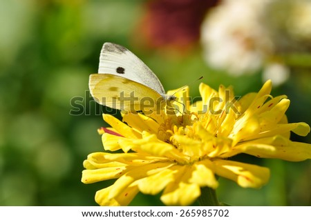 white butterfly on the bright sunshine - stock photo