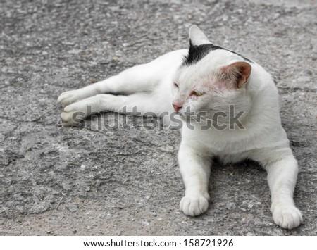 White cat - stock photo