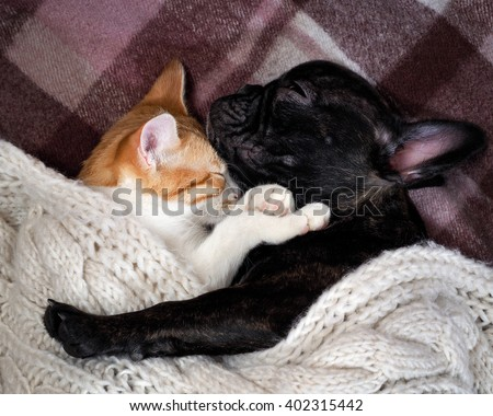 White cat and black dog sleeping together under a knitted blanket. Friendship cats and dogs, animals in the apartment house. Cute pets. Love the different species of animals  - stock photo