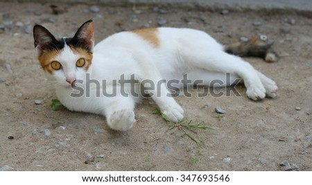 white cat at home - stock photo