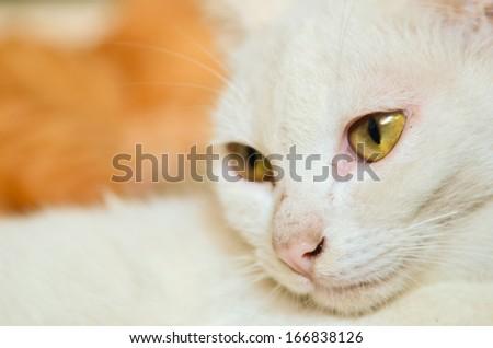 White cat closeup - stock photo