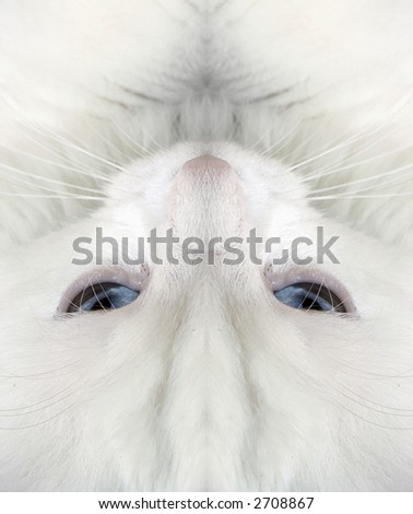 White cat:closeup - stock photo
