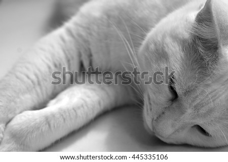 Merino Wool Balls Lying On Wooden Stock Photo 576962050