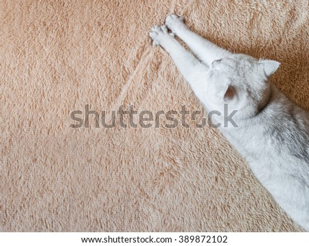 white cat comfortably lying on the bed. Space for text - stock photo