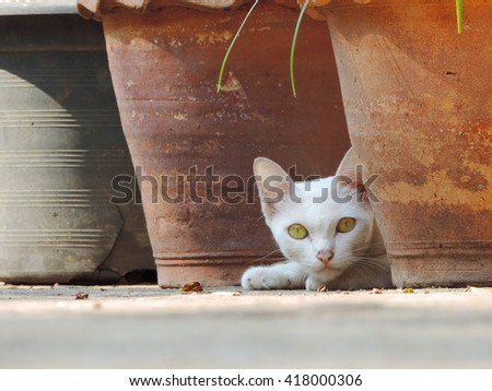 white cat curious.           - stock photo