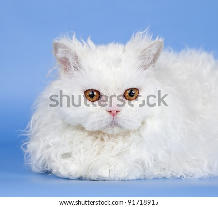 White cat head on blue background - stock photo