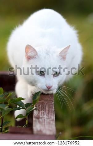 White cat in garden - stock photo