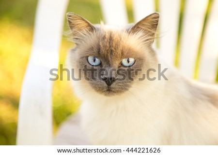 white cat in nature,white cat blue eyes,domestic animals,cat outside,cat in light,loving cats,head cat,closeup cat,cat looking to me, beautiful cats, white and black cats, strong cat,domestic cats - stock photo