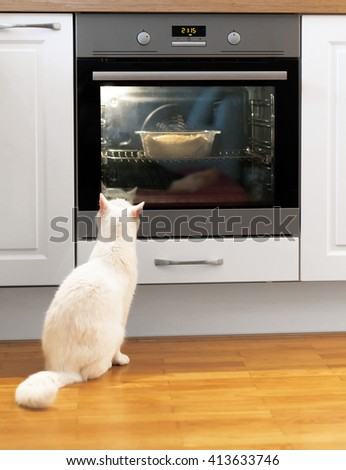 White cat is watching food in the oven. - stock photo