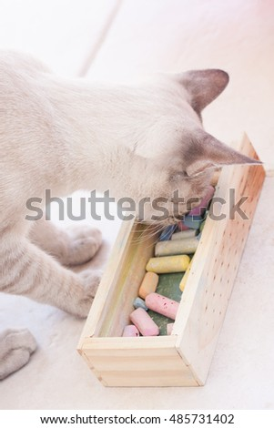 White cat looks into chalk box filled with colorful chalks