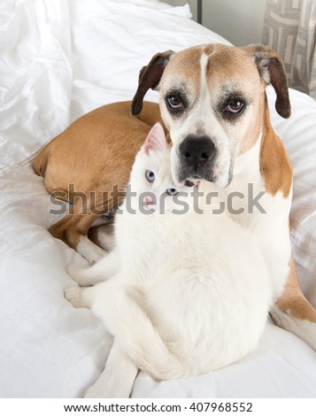 White Cat Loving  Boxer Mix Dog Relaxing on Bed