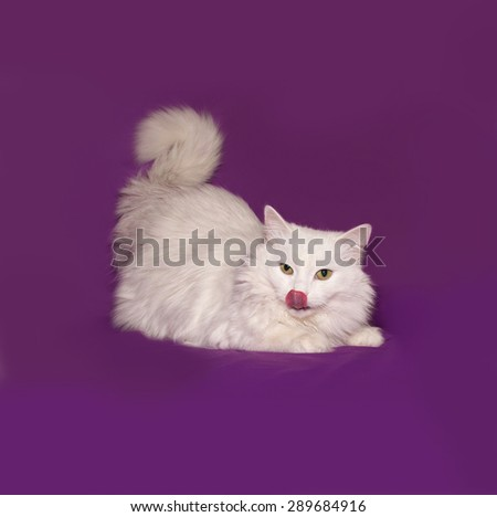 White cat lying on lilac background