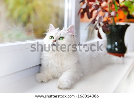 White cat lying on the windowsill. - stock photo