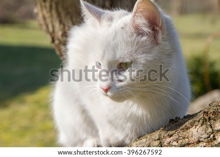 White cat on a tree