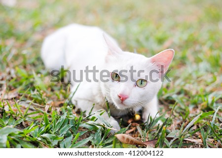 white cat pink nose lay on grass