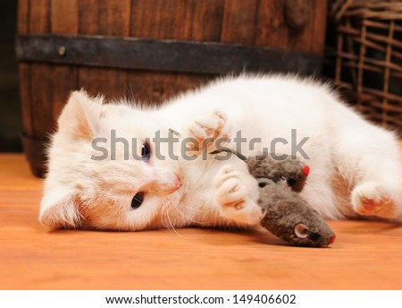White cat playing with a plush mouse  - stock photo