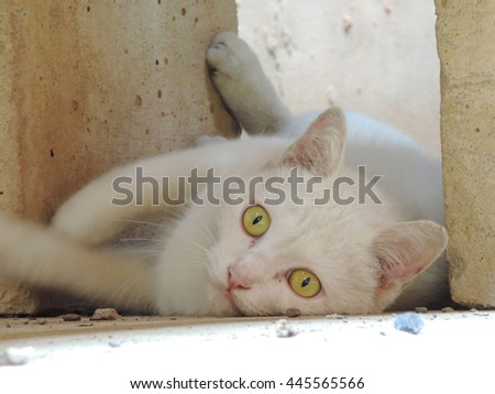 white cat relaxation outdoor.             - stock photo