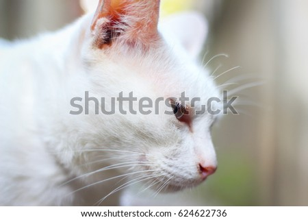 white cat sitting and looking around. Animal portrait.