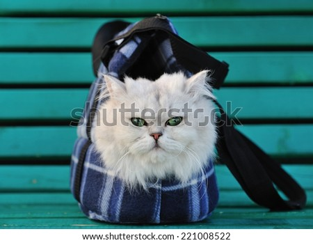 White cat sitting in a bag for the animals on the bench - stock photo