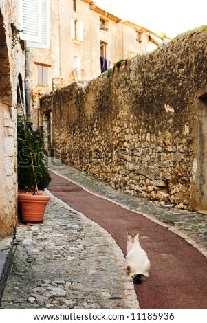 White cat sitting in an alleyway in the quaint little French hilltop village of Saint-Paul de Vence, Southern France,  Alpes Maritimes, next to the Mediterranean sea - A Heritage Site - stock photo
