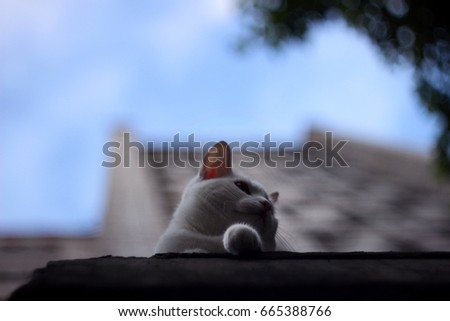 White cat sitting on the roof of the house, behind cat brick multistory house