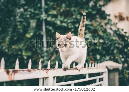 White cat walking on spiked fence - stock photo