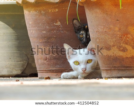 white cat with black cat curious.           - stock photo