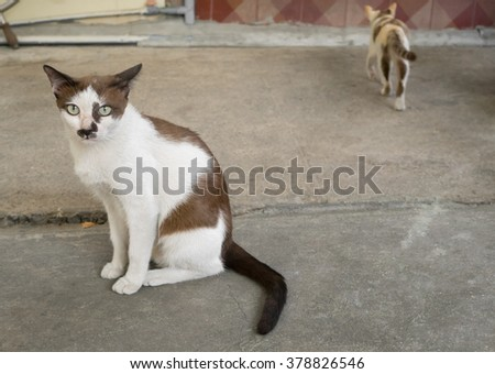 White cat with black dots on its face is siting in a parking lot - stock photo